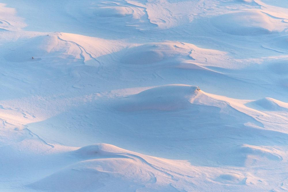 Snow Dreary-Snow Dreary